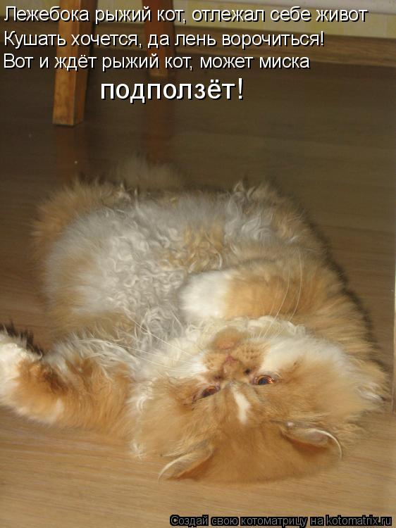 Кот лежебока