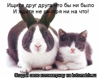 Котоматрица: Ищите друг друга что бы ни было  И ждите не смотря ни на что!