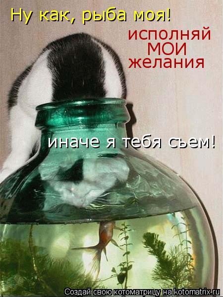 Котоматрица: Ну как, рыба моя! исполняй МОИ желания иначе я тебя съем!