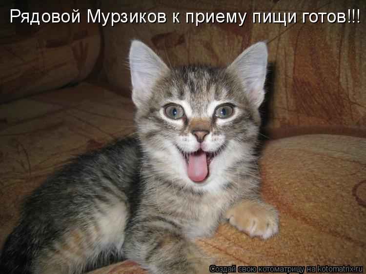 Котоматрица: Рядовой Мурзиков к приему пищи готов!!!