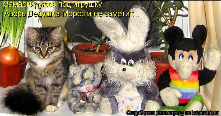 Котоматрица: Замаскируюсь под игрушку... Авось Дедушка Мороз и не заметит...