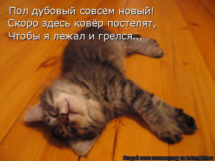 Котоматрица: Пол дубовый совсем новый! Скоро здесь ковёр постелят, Чтобы я лежал и грелся...