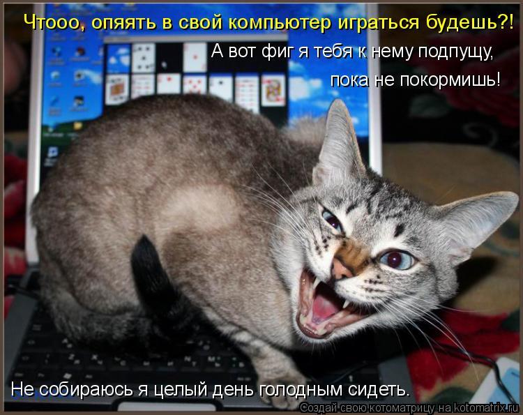 Котоматрица: Чтооо, опяять в свой компьютер играться будешь?! А вот фиг я тебя к нему подпущу, пока не покормишь! Не собираюсь я целый день голодным сидеть