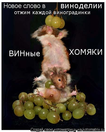 Котоматрица: Новое слово в виноделии ВИНные  ХОМЯКИ отжим каждой виноградинки