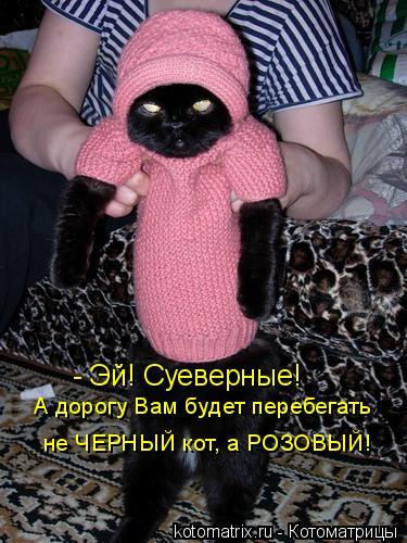 Котоматрица: - Эй! Суеверные! А дорогу Вам будет перебегать не ЧЕРНЫЙ кот, а РОЗОВЫЙ!