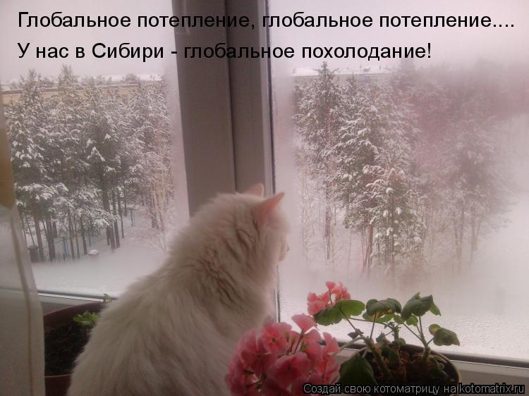 Котоматрица: Глобальное потепление, глобальное потепление.... У нас в Сибири - глобальное похолодание!
