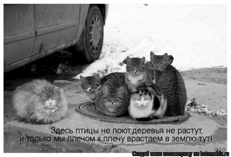 Котоматрица: Здесь птицы не поют,деревья не растут, и только мы плечом к плечу врастаем в землю тут!