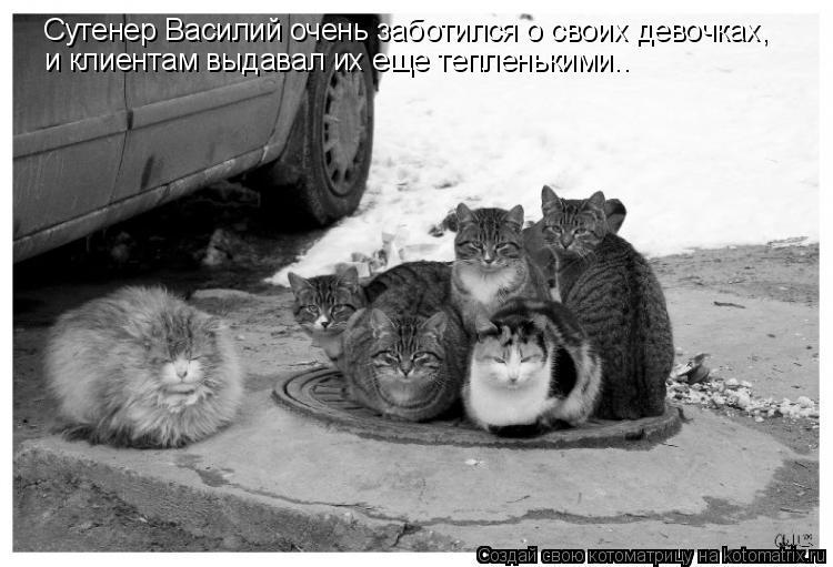 Котоматрица: Сутенер Василий очень заботился о своих девочках, и клиентам выдавал их еще тепленькими..