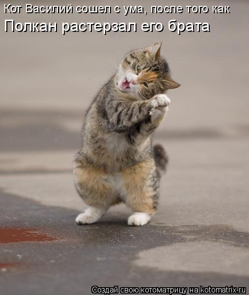Котоматрица: Кот Василий сошел с ума, после того как  Полкан растерзал его брата