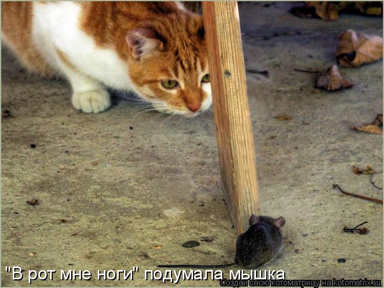 """Котоматрица: """"В рот мне ноги"""" подумала мышка"""