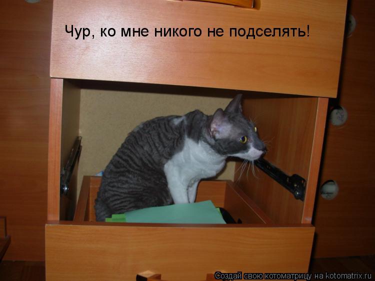 Котоматрица: Чур, ко мне никого не подселять!