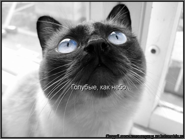 Котоматрица: Голубые, как небо...