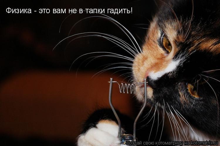 Котоматрица: Физика - это вам не в тапки гадить!