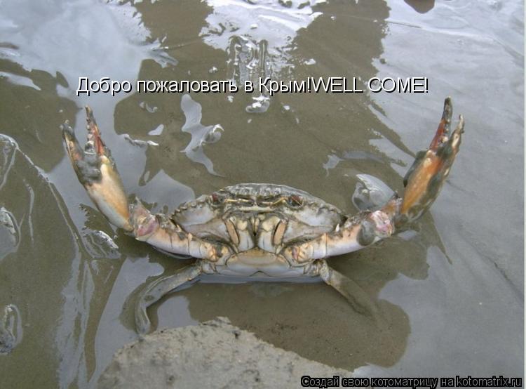 Котоматрица: Добро пожаловать в Крым!WELL COME!