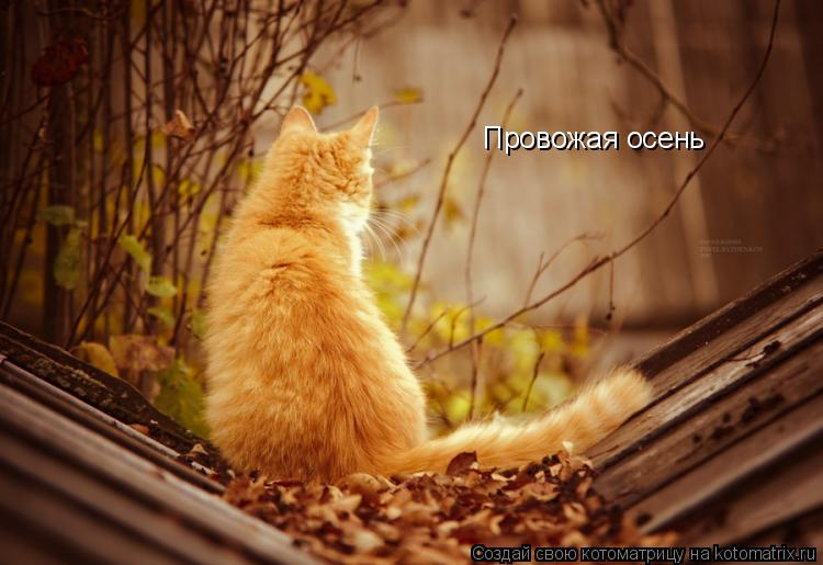 Котоматрица: Провожая осень