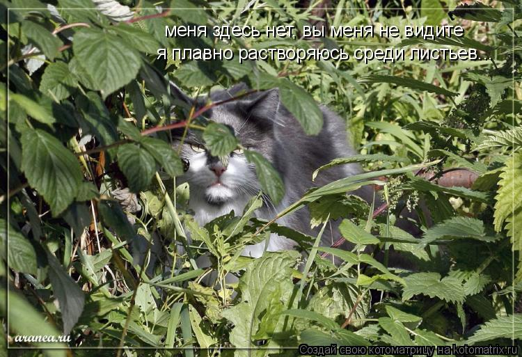Котоматрица: меня здесь нет, вы меня не видите я плавно растворяюсь среди листьев...