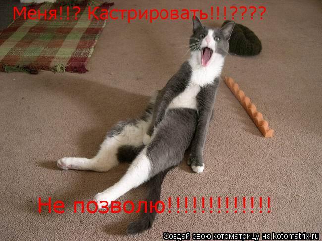Котоматрица: Меня!!? Кастрировать!!!???? Не позволю!!!!!!!!!!!!!