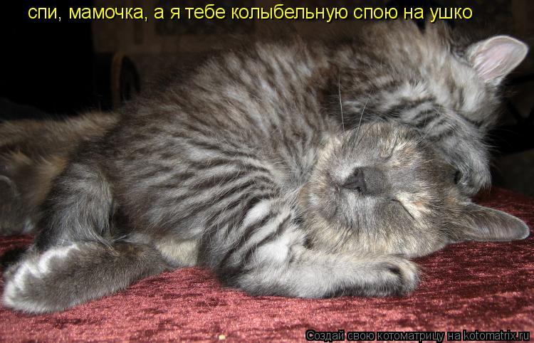 Котоматрица: спи, мамочка, а я тебе колыбельную спою на ушко