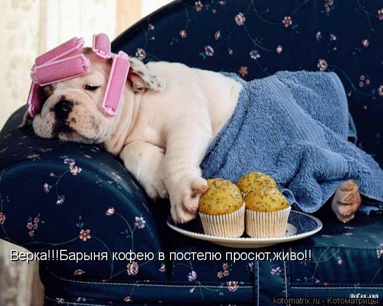Котоматрица: Верка!!!Барыня кофею в постелю просют,живо!!