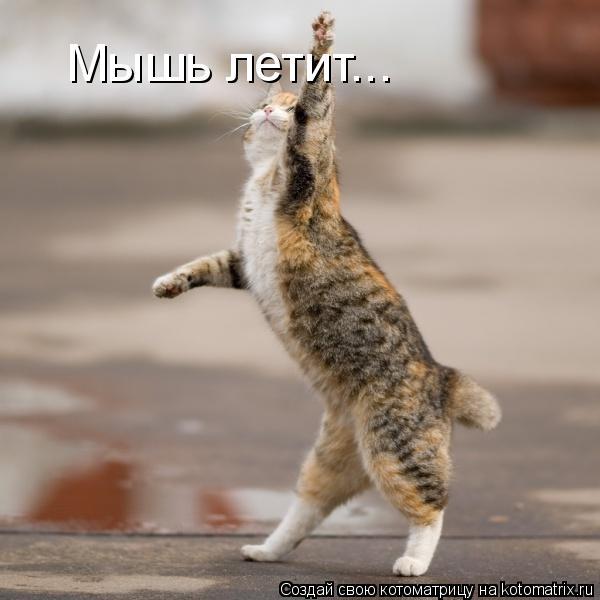 Котоматрица: Мышь летит...