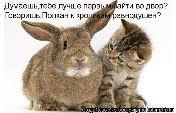 Котоматрица: Думаешь,тебе лучше первым зайти во двор? Говоришь,Полкан к кроликам равнодушен?