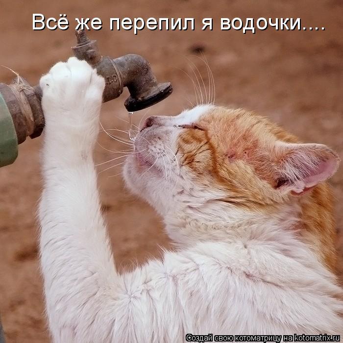 Котоматрица: Всё же перепил я водочки....