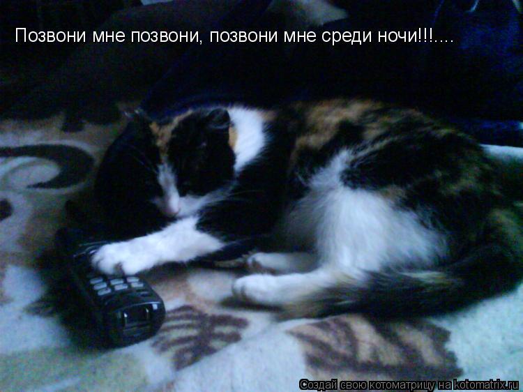 Котоматрица: Позвони мне позвони, позвони мне среди ночи!!!....