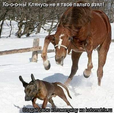 Котоматрица: Ко-о-о-нь! Клянусь не я твоё пальто взял!