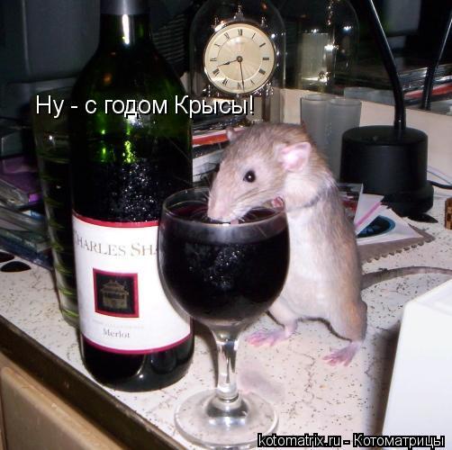 Котоматрица: Ну - с годом Крысы!