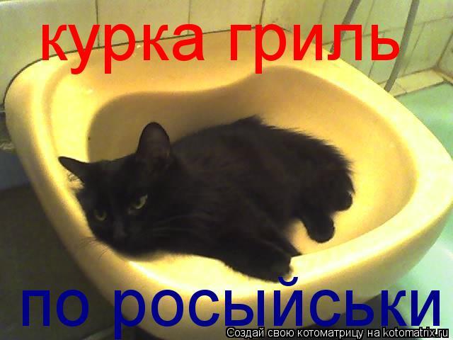 Котоматрица: курка гриль  по росыйськи