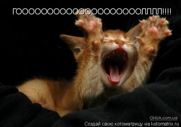 Котоматрица: ГООООООООООООООООООООЛЛЛЛ!!!!