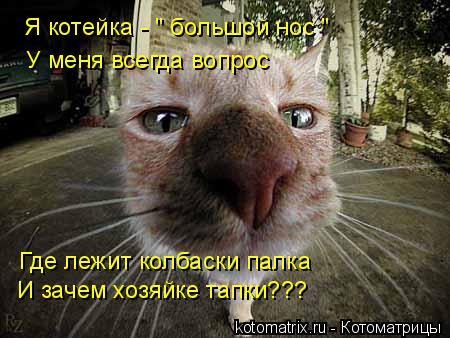 """Котоматрица: Я котейка - """" большой нос """" У меня всегда вопрос Где лежит колбаски палка И зачем хозяйке тапки???"""