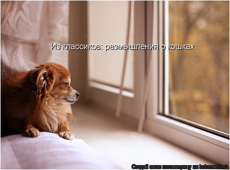 Котоматрица: Из классиков: размышления о кошках