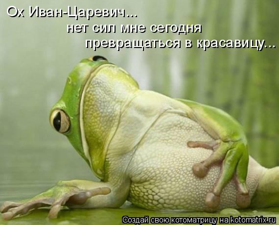 Котоматрица: Ох Иван-Царевич... нет сил мне сегодня  превращаться в красавицу...