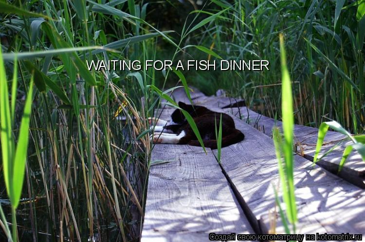 Котоматрица: WAITING FOR A FISH DINNER