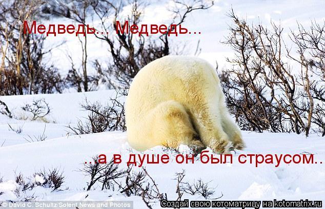 Котоматрица: Медведь... Медведь... ...а в душе он был страусом...
