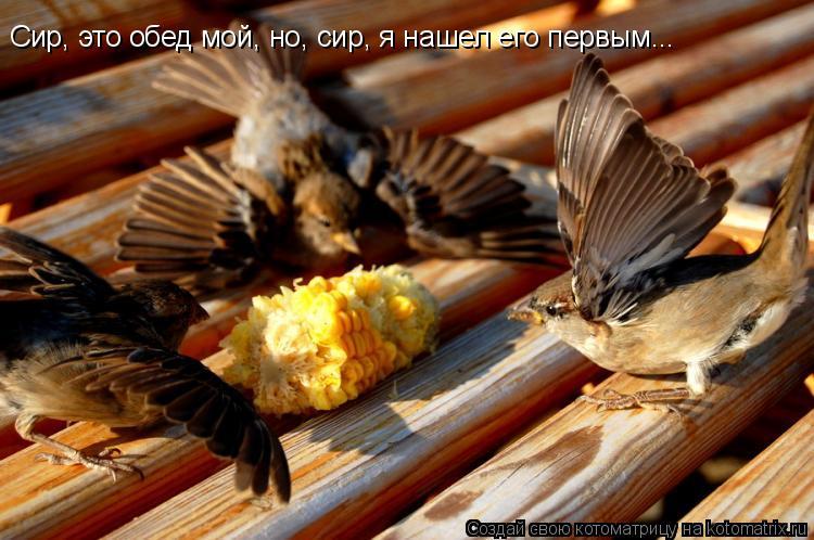 Котоматрица: Сир, это обед мой, но, сир, я нашел его первым...