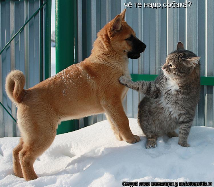 Котоматрица: чё те надо,собака?