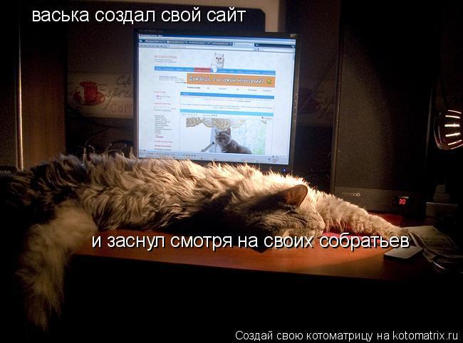 Котоматрица: васька создал свой сайт и заснул смотря на своих собратьев