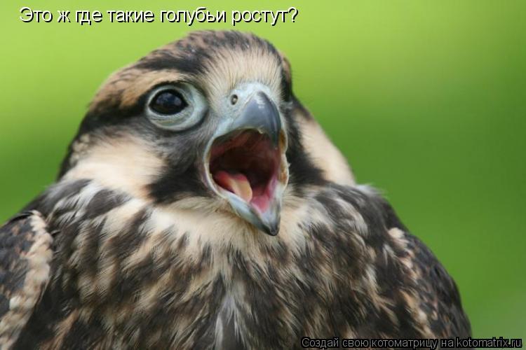 Котоматрица: Это ж где такие голубьи ростут?
