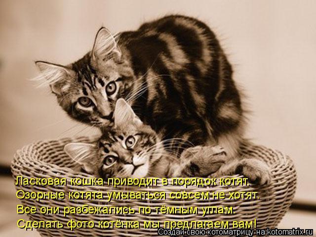 Котоматрица: Озорные котята умываться совсем не хотят. Ласковая кошка приводит в порядок котят. Все они разбежались по тёмным углам. Сделать фото котёнк