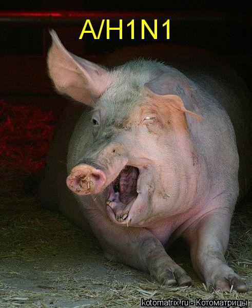 Котоматрица: A/H1N1
