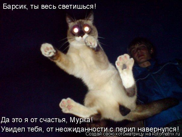 Котоматрица: Барсик, ты весь светишься! Да это я от счастья, Мурка! Увидел тебя, от неожиданности с перил навернулся!