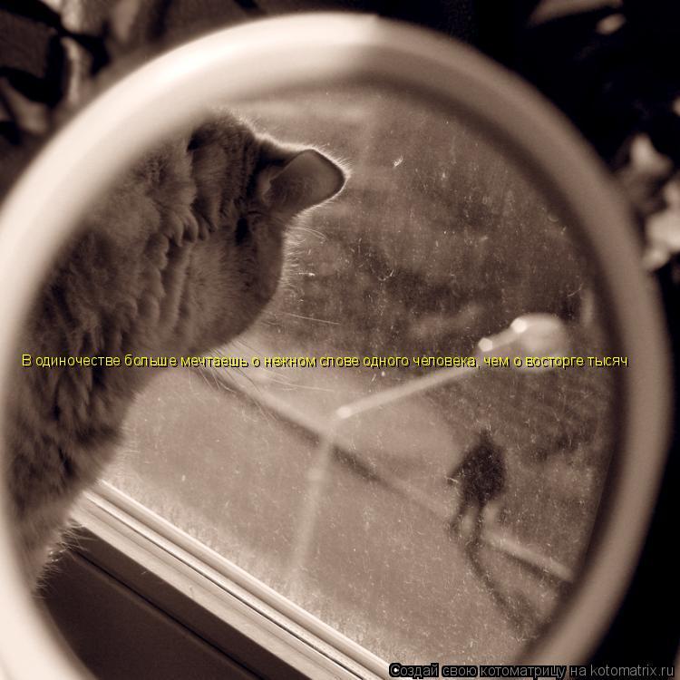 Котоматрица: В одиночестве больше мечтаешь о нежном слове одного человека, чем о восторге тысяч