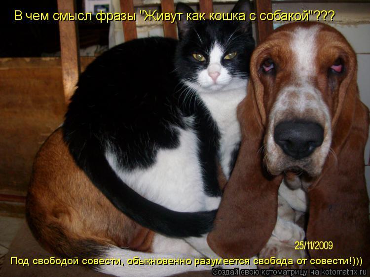 """Котоматрица: Под свободой совести, обыкновенно разумеется свобода от совести!))) В чем смысл фразы """"Живут как кошка с собакой""""???"""