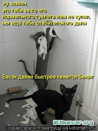 Котоматрица: ну хозяин,  это тебе за то что мы ещё тебе слабительного дали Васёк давай быстрее кажется бежит нормального туалета нам не купил,