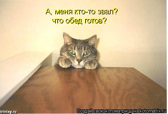 Котоматрица: А, меня кто-то звал?  что обед готов?