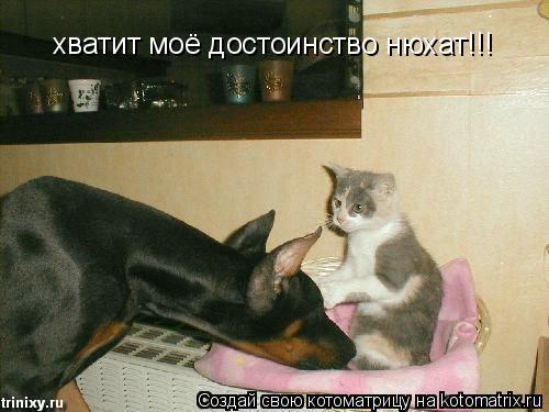 Котоматрица: хватит моё достоинство нюхат!!!