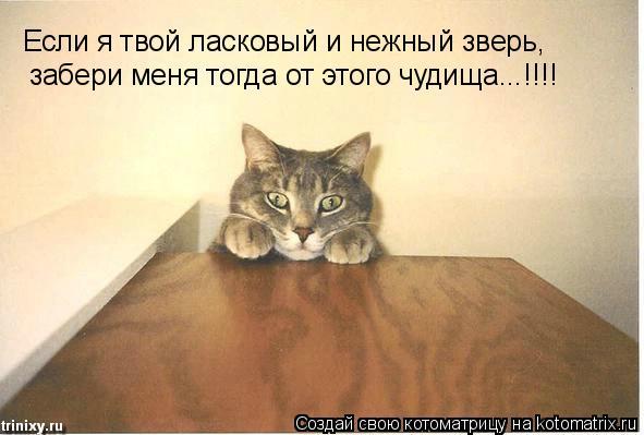 Котоматрица: Если я твой ласковый и нежный зверь, забери меня тогда от этого чудища...!!!!