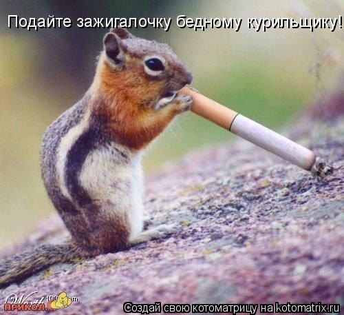 Котоматрица: Подайте зажигалочку бедному курильщику!